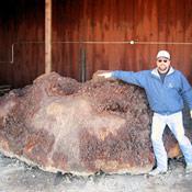 2-redwoodburl3-thumb.jpg