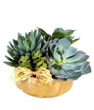 Succulent Garden - Large