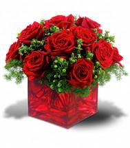 Merry Roses