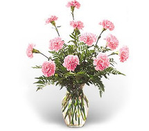 Simply Cheery Carnations