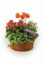 Europen Garden Basket With Gerbera
