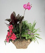 Garden basket of green and blooming plants with orchid