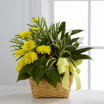 TheLoving Light Dishgarden is a ray of hope and a beautiful symbol of eternal life offered through our finest collection of plants. A palm plant, peace lily plant, dracaena plant and philodendron plant create an exquisite look when brought together i