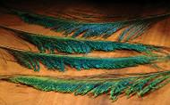 Peacock Swords