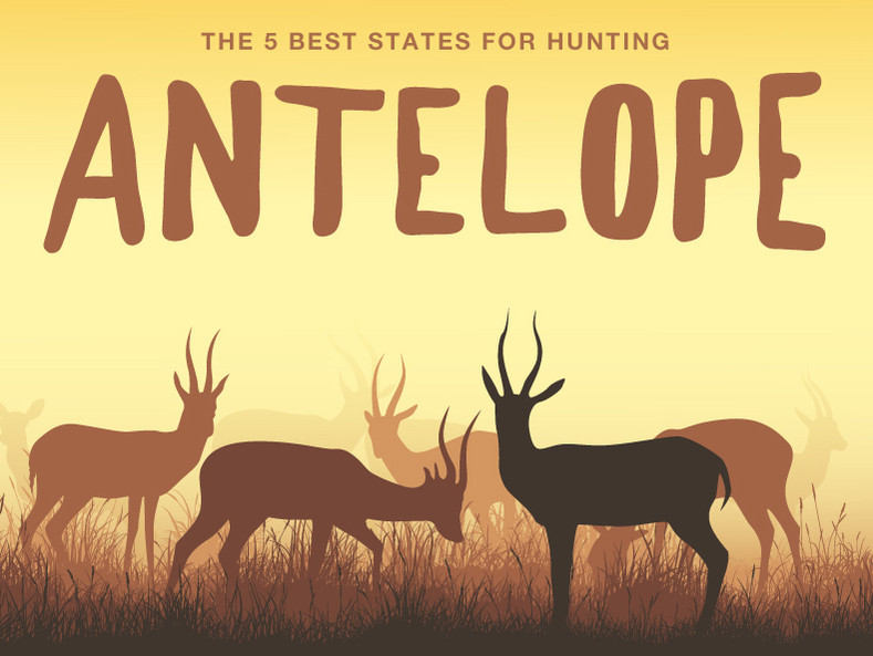 The 5 Best States for Antelope Hunting