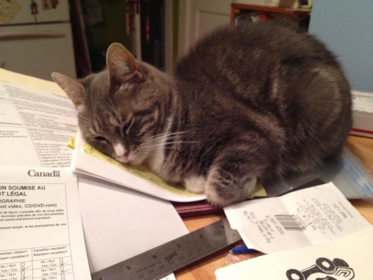 printer-s-devil-cat.jpg