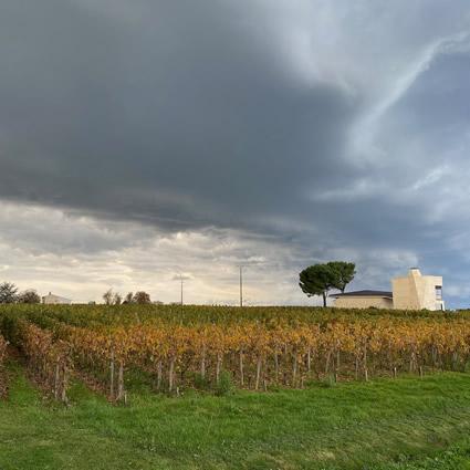 Pomerol vineyards in autumn