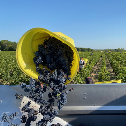 Harvest 2020 - Bordeaux red