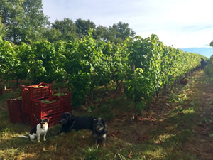 Guarding the crop