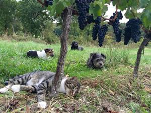 Goose, Pavie, Palmer, Margaux & Merlot grapes