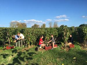 Harvest 2016 - Quinneys Picking