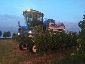 Harvest 2016 - Rosé at dawn