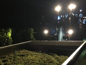 Harvest 2016 - In The Dark