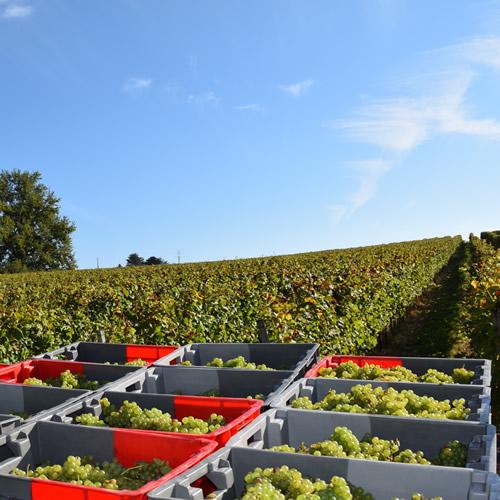 Crémant de Bordeaux 2014