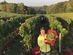 Harvest 2018 - Hand Picking Whites