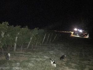 Harvest 2018 - Sauvignon Blanc 2018