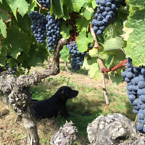 Les Trois Hectares Rouge 2015