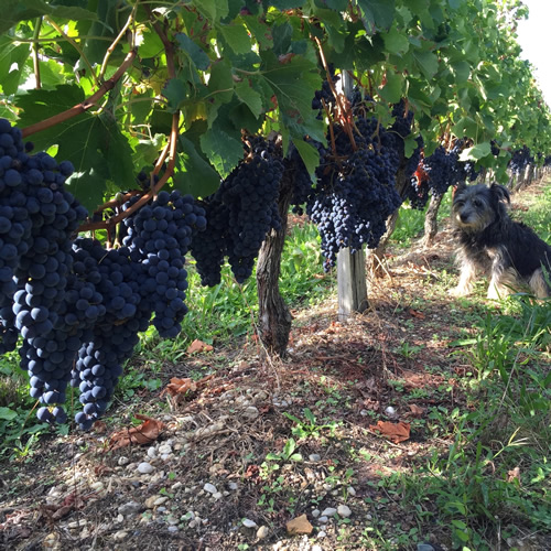 Les Trois Hectares Rouge 2016