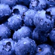 Blueberry Burst Liquid