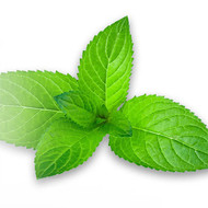 Cool Mint Concentrate 10ml