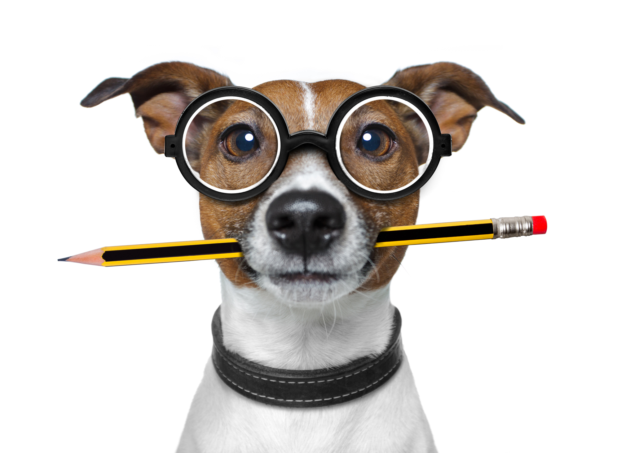 Unique Ways to Market Your Veterinary Clinic