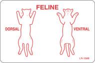 """LR-158B: Feline Dorsal/Ventral """"B"""" Series"""