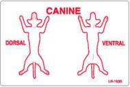 "LR-163B: Canine Dorsal/Ventral ""B"" Series"