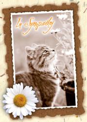 SYMCAT8 - Sympathy Card