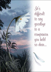 SYMDAISY - Sympathy Card