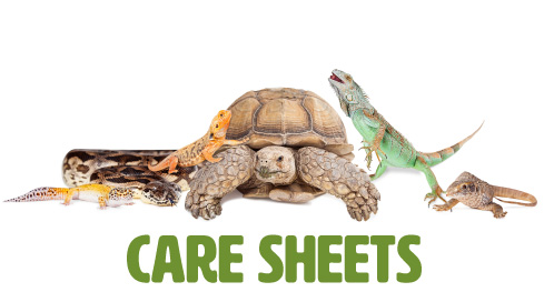 Care Sheets