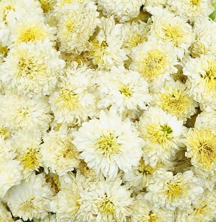 Organic chrysanthemum flowers white screen tea inc organic chrysanthemum flowers white mightylinksfo