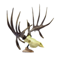 Signature Big Rack Whitetail Raxx