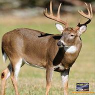 Infinity Target Face Deer 32x32