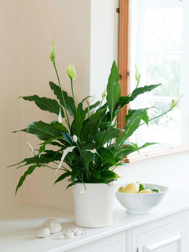 5 indoor plants we love cocoweb mightylinksfo