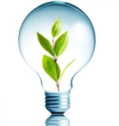 Environment, light bulb, plant- Cocoweb