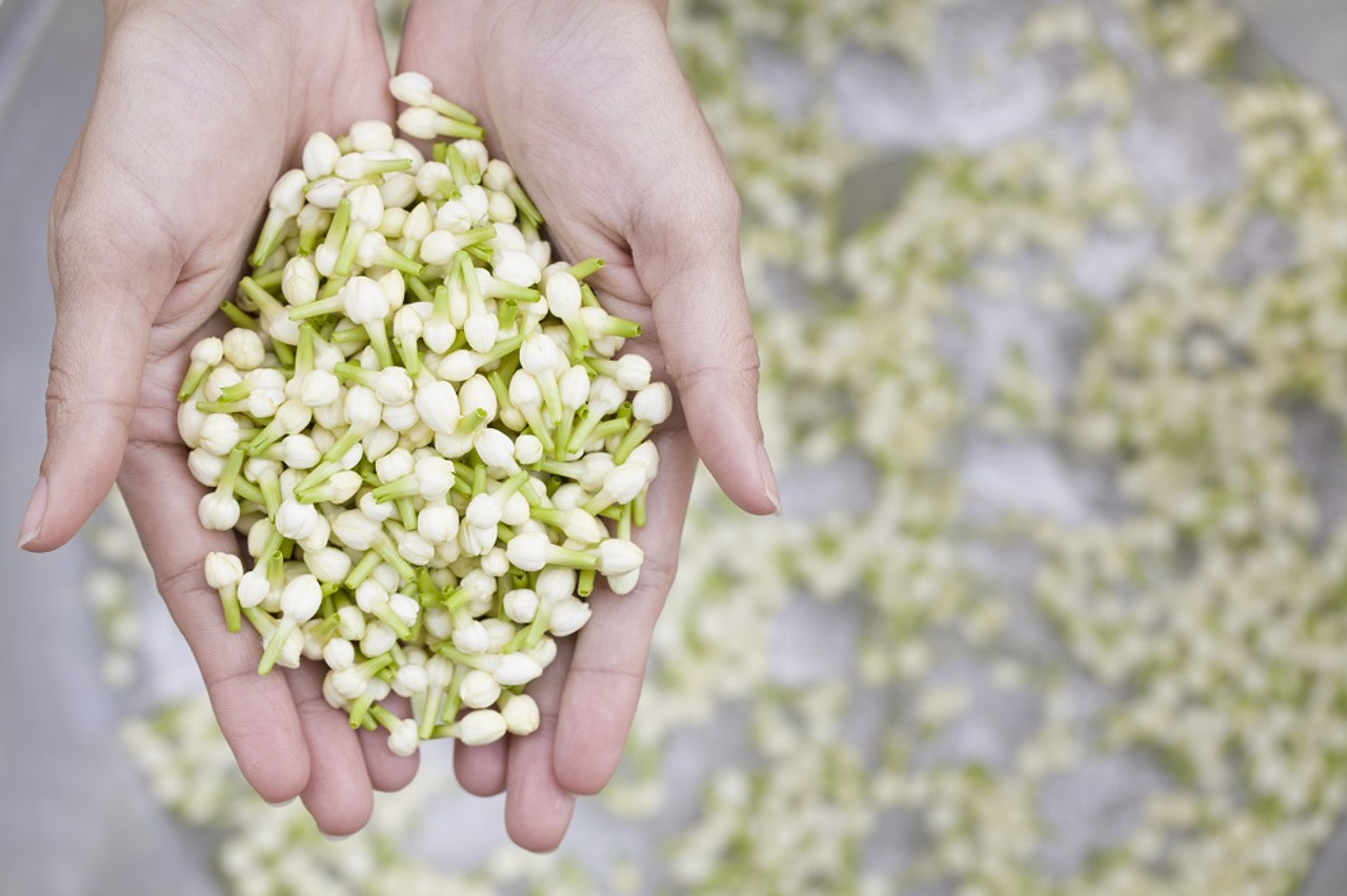 Beauty Benefits of Jasmine