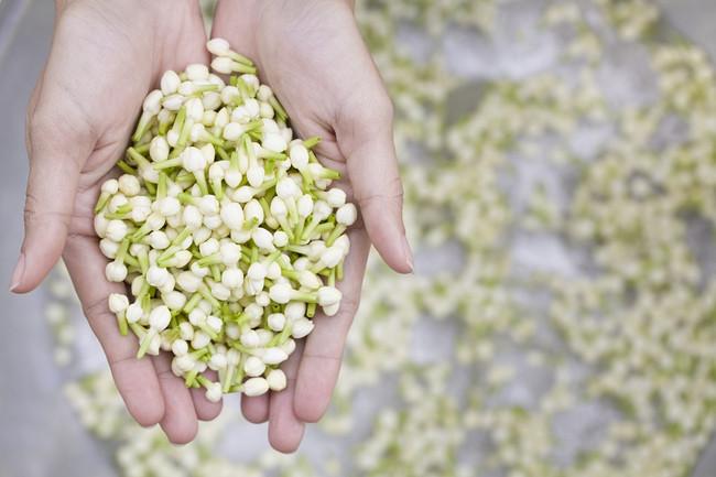 Beauty Benefits of Jasmine