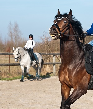 horse-2118054-1920-low-res.jpg
