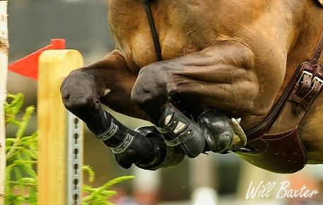 horse-jumping-legs-web.jpg