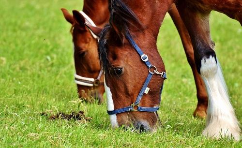 horses-2344634-1920-low-res.jpg