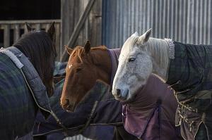 horses-3655721-1280.jpg