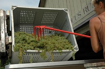 vineyard-winery-1.jpg