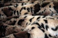 Tiger Dreamz Pet Bed - Clouded Leopard
