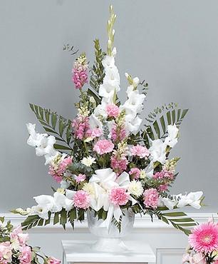 Gladiolus Cascade