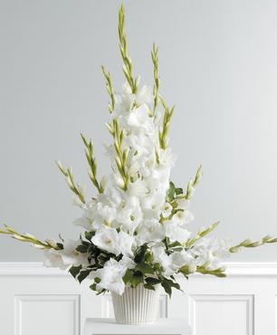 Gladiolus Essence