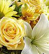 yellow-white.jpg