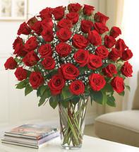 4 Dozen Red Roses Ultimate Elegance Premium Long Stem
