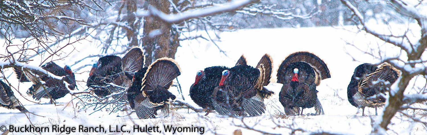 Turkey Chokes at Windwalker Outdoors in Montana