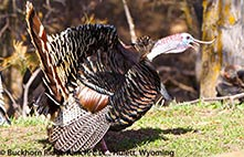 Comp n Choke Turkey Chokes 12 Gauge
