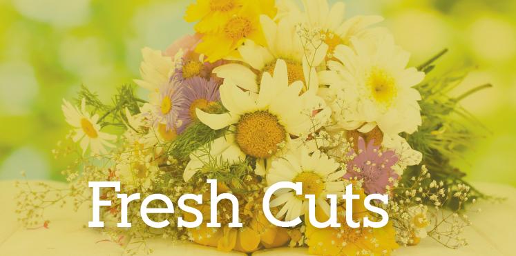 Shop Fresh Cuts